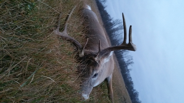 Last minute whitetail buck hunt