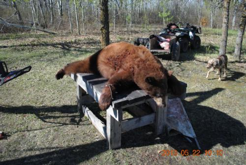 Tuff but good Manitoba Bear Hunting