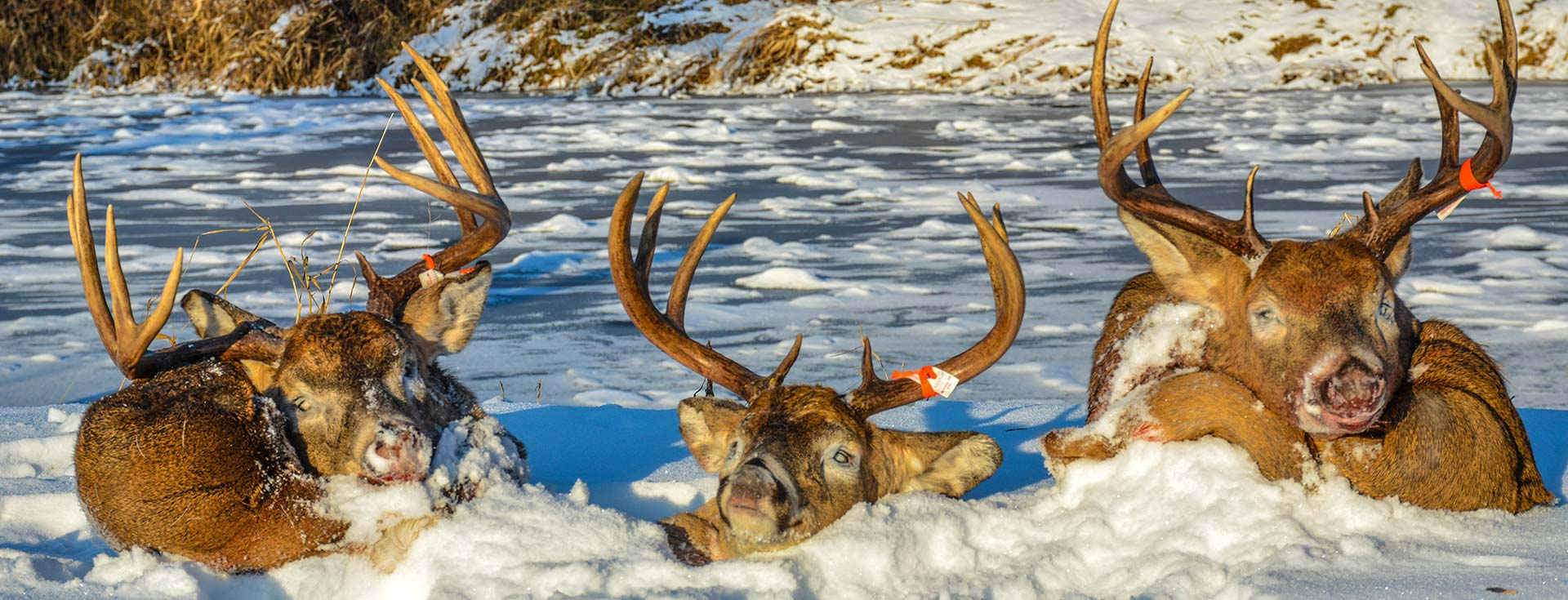 What to Expect on your Whitetail Hunt in Manitoba