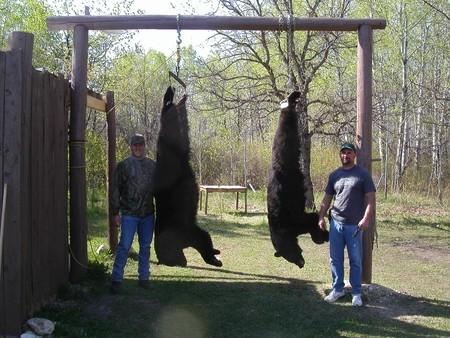 Canada Bear Hunts