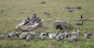 Field goose hunt randy