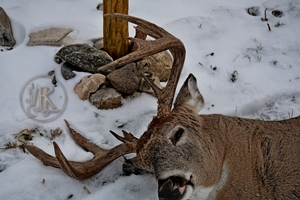 Whitetail Hunting Photo Gallery
